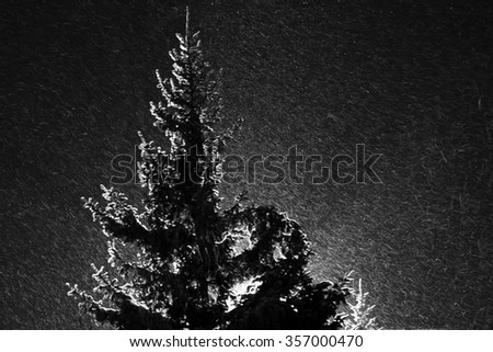 Spruce illuminated by the floodlight behind in the snowstorm at night - stock photo