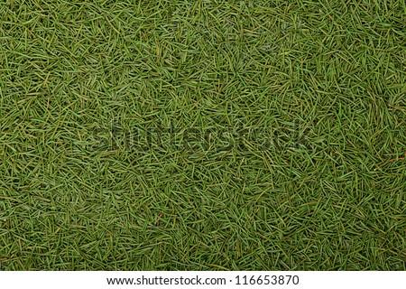 Spruce needles background - stock photo