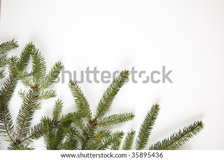 Spruce on the white background