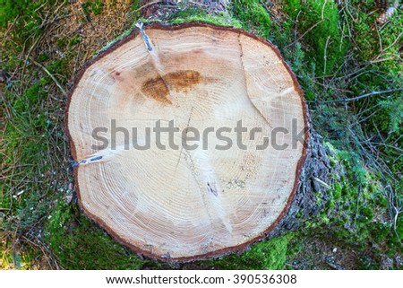 Spruce Stump on a clearcut area - stock photo