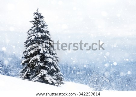 Spruce Tree foggy Forest Covered by Snow - stock photo