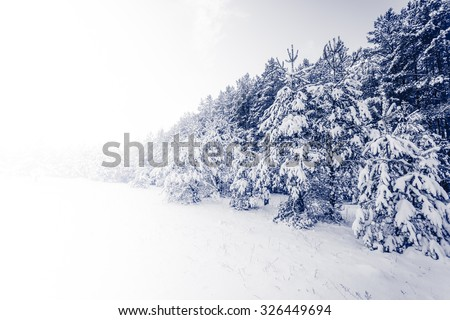 Spruce Tree foggy Forest Covered by Snow in Winter Landscape - stock photo