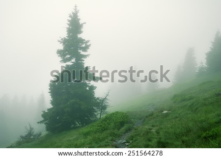 Spruce tree in dense fog in the mountains - stock photo