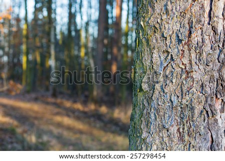 Spruce tree trunk aligned to the right of the image with empty space for your text on left - stock photo