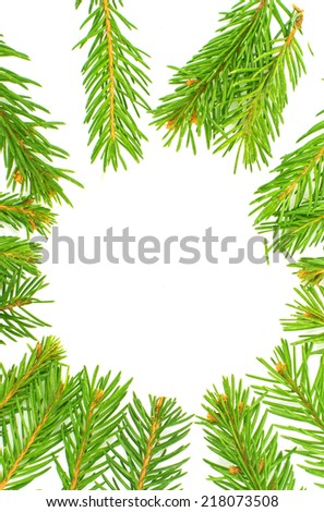 spruce twig on white background