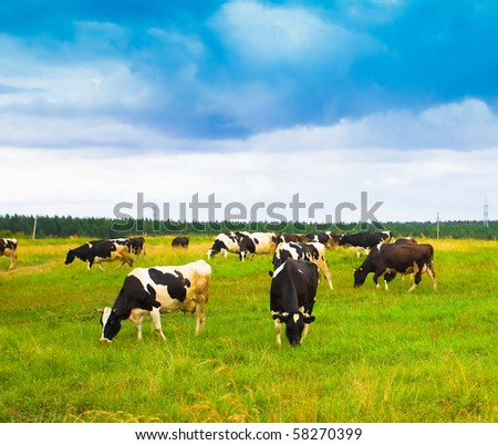 Squad of Cute Cows
