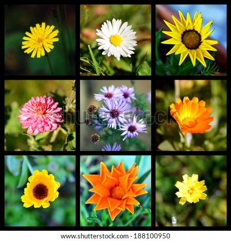 square collage of  flowers - stock photo