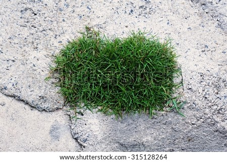 square grass shape on concrete floor for background used - stock photo