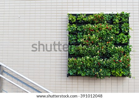 Square Green plants and flower on the wall - stock photo