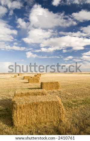 Square hay bales in a farmers field under a blue sky.