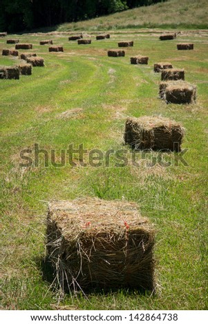 Square hay bales lay in a freshly mowed field - stock photo