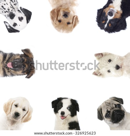 Square of different puppies,dogs isolated