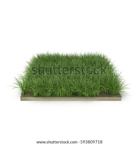 Square of Ryegrass Grass field over white. 3D illustration