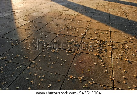 square pavement with flower petals on it