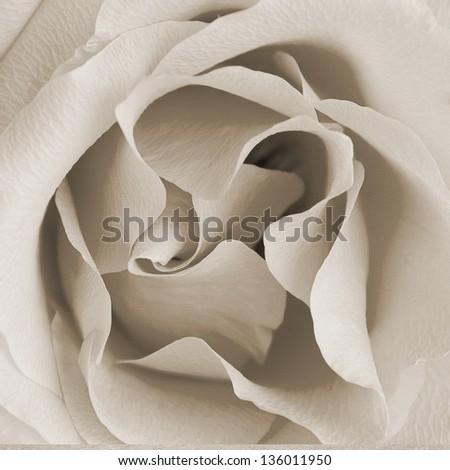 Square retro texture with rose bud half open - stock photo