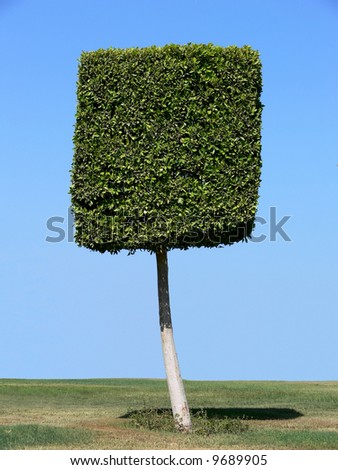 Square shape tree