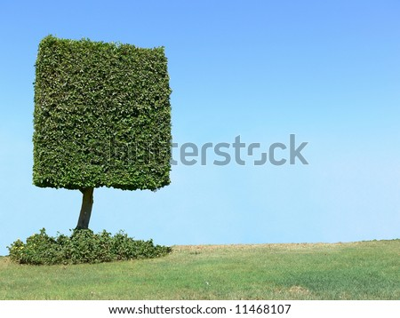 Square shape tree with copyspace - stock photo
