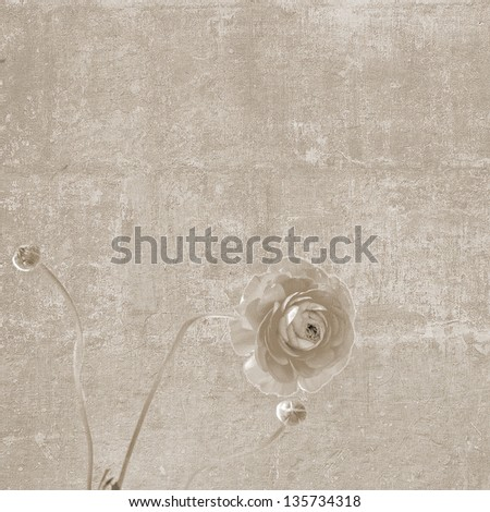 Square vintage texture with peony flower blooming - stock photo
