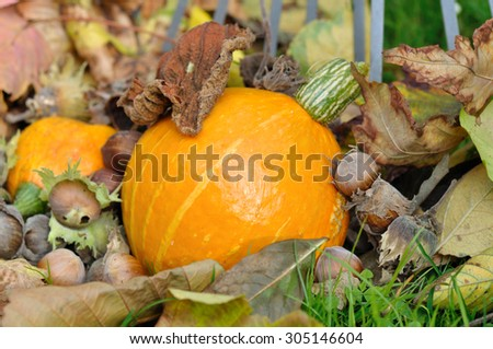 squash, dead leaves, dried fruit on the ground - stock photo