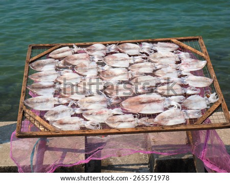 Squid lay on net, Dried Squid, traditional squids drying in the sun in a idyllic fishermen village,Thailand. Squid        - stock photo