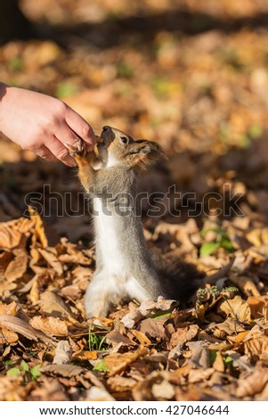 squirrel and nut in a human hand - stock photo