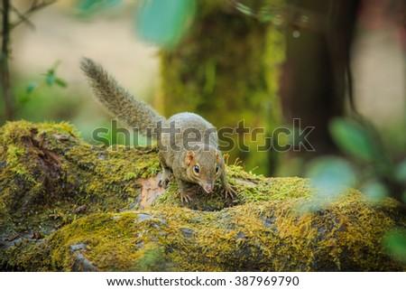 Squirrel, animal, wildlife - stock photo