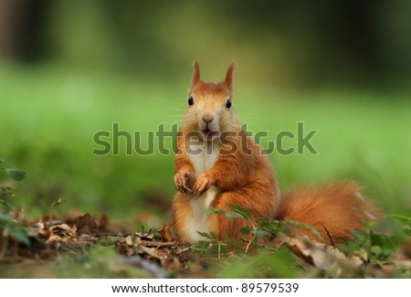 Squirrel chewing