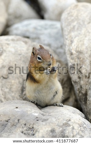 Squirrel Chipmunk Lake Louise in Banff National Park in Alberta Canada
