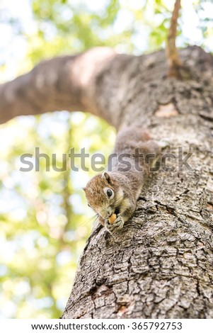 Squirrel clinging and eating nuts on a tree.