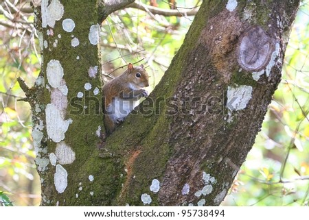 Squirrel eating in a tree.