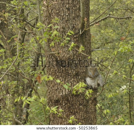 Squirrel eating nut on tree