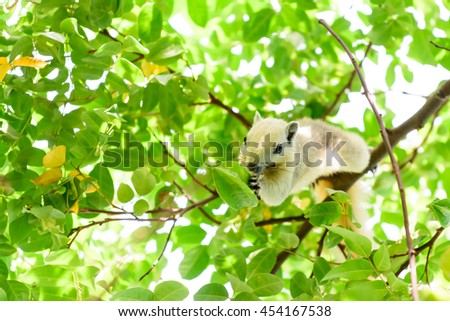 squirrel eating star fruit on tree
