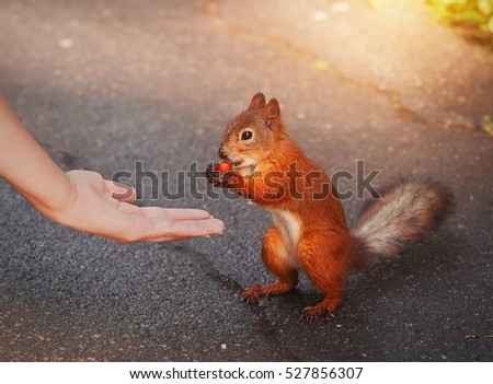 Squirrel feeding from the hand