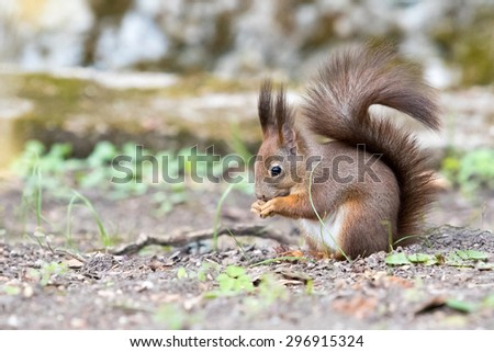squirrel in a park eating - stock photo