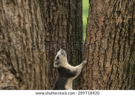 Squirrel in park - stock photo