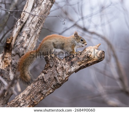 Squirrel in Spring - stock photo