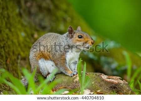 Squirrel in the wild
