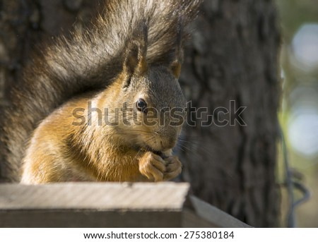 Squirrel in the wood - stock photo