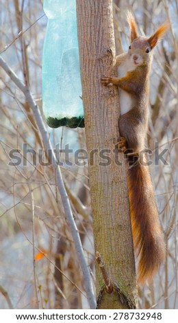 squirrel is climbing up the tree. - stock photo