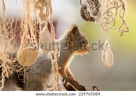 squirrel looking behind a fish net