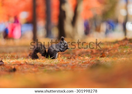 Squirrel looking for food. - stock photo
