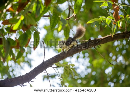 Squirrel lying on tree branches. - stock photo