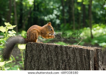 Squirrel on a hemp with a nut, Russia, Moscow, park summer