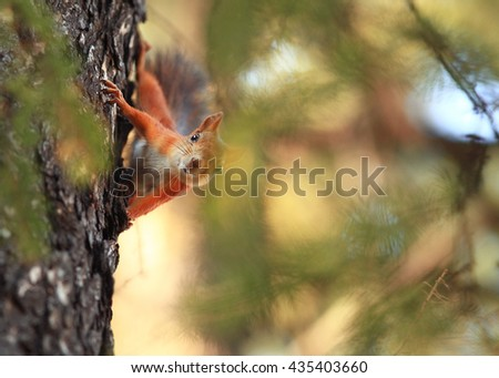 squirrel on a tree in a park close-up - stock photo