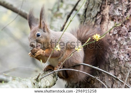 squirrel on a tree with nuts - stock photo