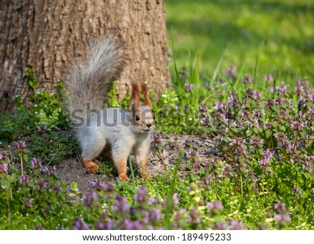 squirrel on the grass near the tree