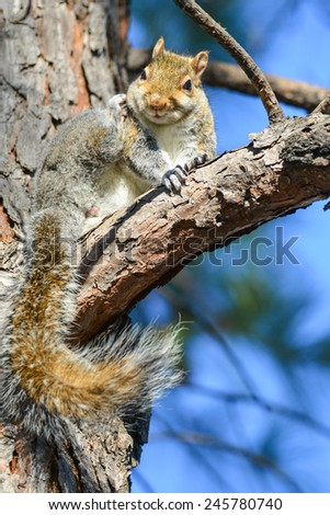 Squirrel on tree branch - stock photo