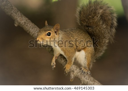 Squirrel preparing to jump