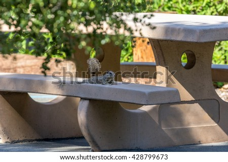 Squirrel relaxing on a Picnic Bench