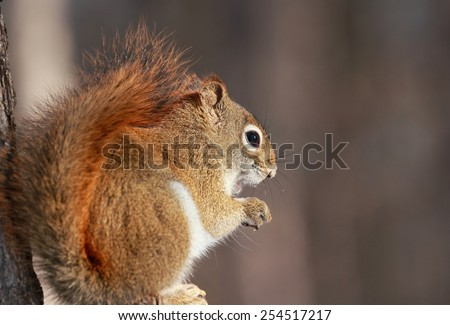 squirrel resting in nature